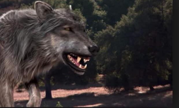 На дорогу к охотнику вышел гигантский верволк