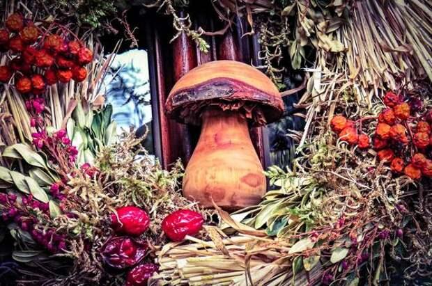 По грибы и ягоды только по закону. Россиянам ужесточили правила сбора грибов и березового сока