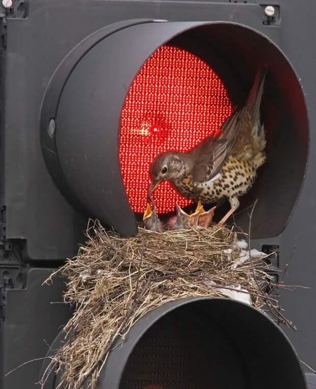 Фотоподборка: Как птицы заботятся о своем потомстве