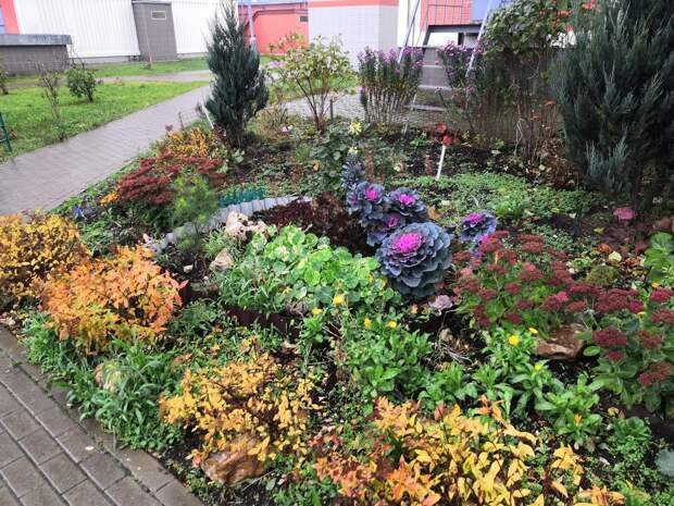 Фото дня: ноябрьский цветущий сад