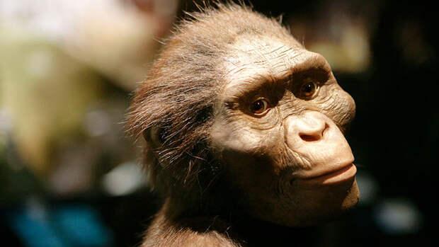 Люси грохнулась с дерева: Ученые выяснили, что австралопитек Люси погибла от падения с дерева