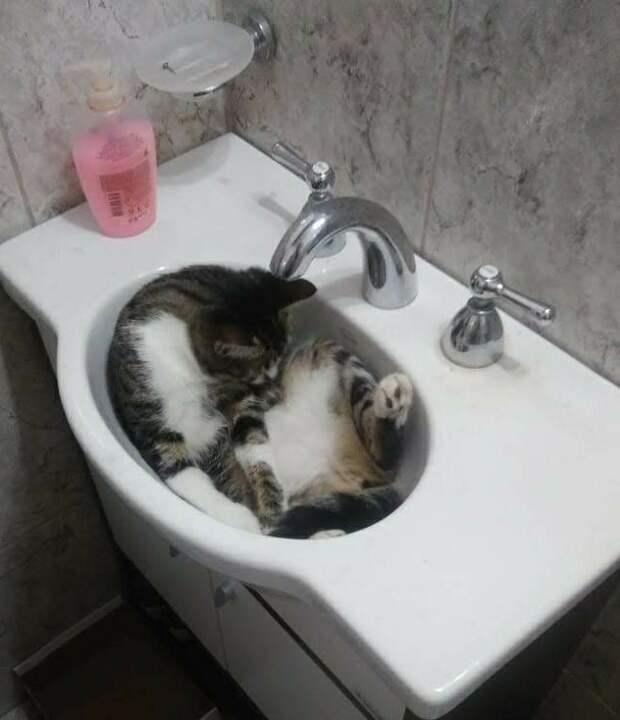 Котики-обормотики со своей исключительной логикой