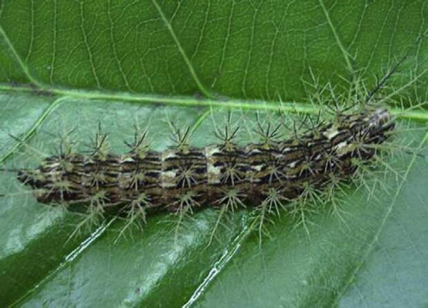 ТОП самых опасных в мире насекомых