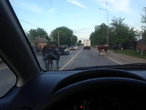 «Самые ублюдские регионы — вокруг Москвы»: Россия глазами девушки за рулем