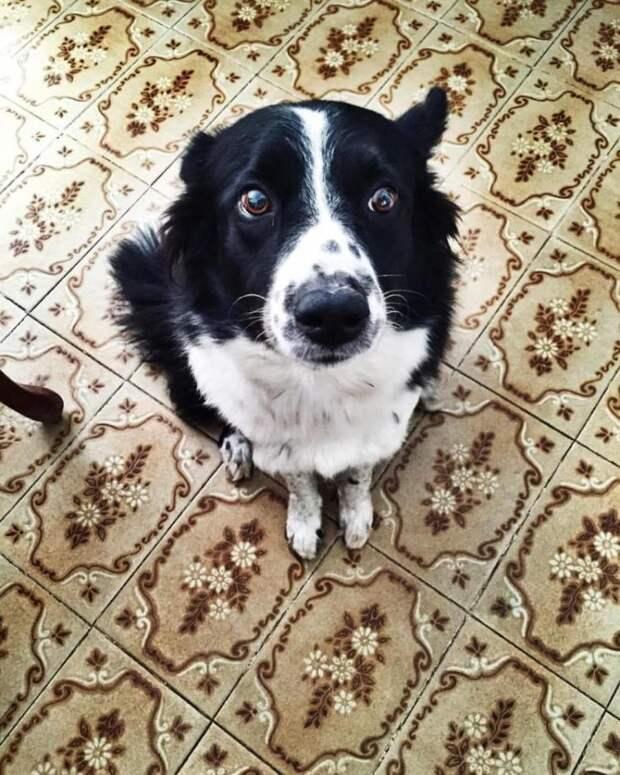 Дюжина признаков, что ваша собака уже научилась вами манипулировать