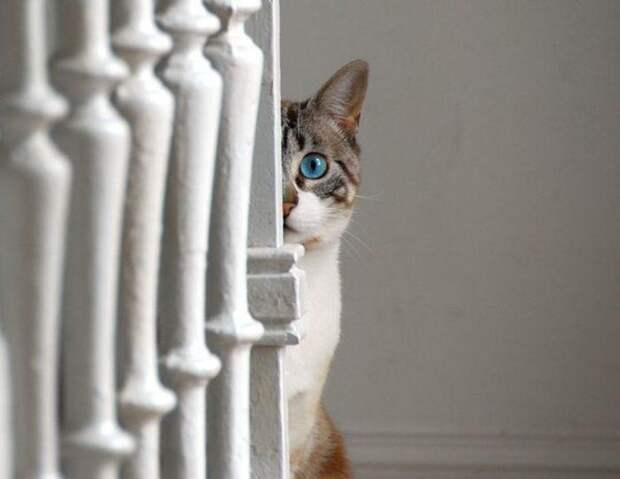 Прикольные животные. Любопытные коты (24 фото)