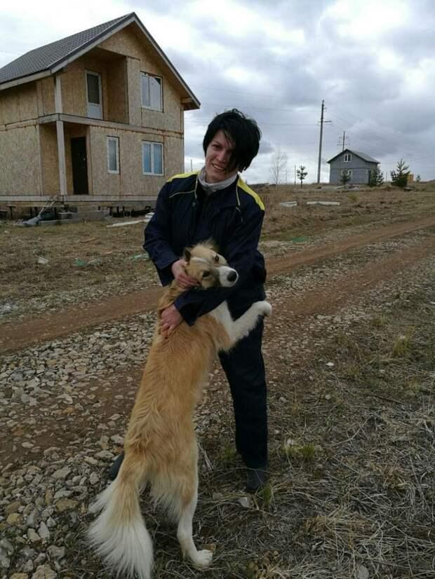 Красивейшая собака, которую предали хозяева, скиталась по стройкам красивая собака, приют, собака