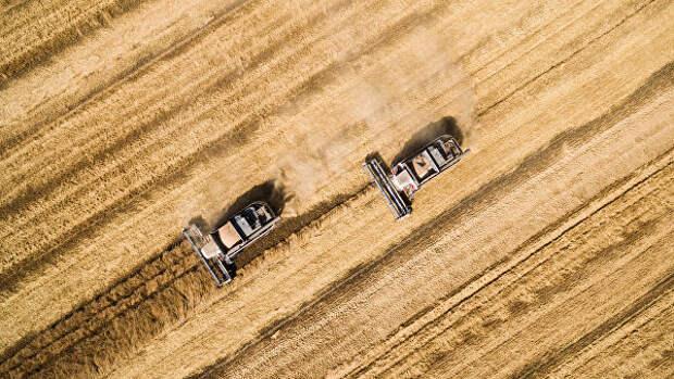 Хлебный край: Россия стала главным поставщиком зерна в мире
