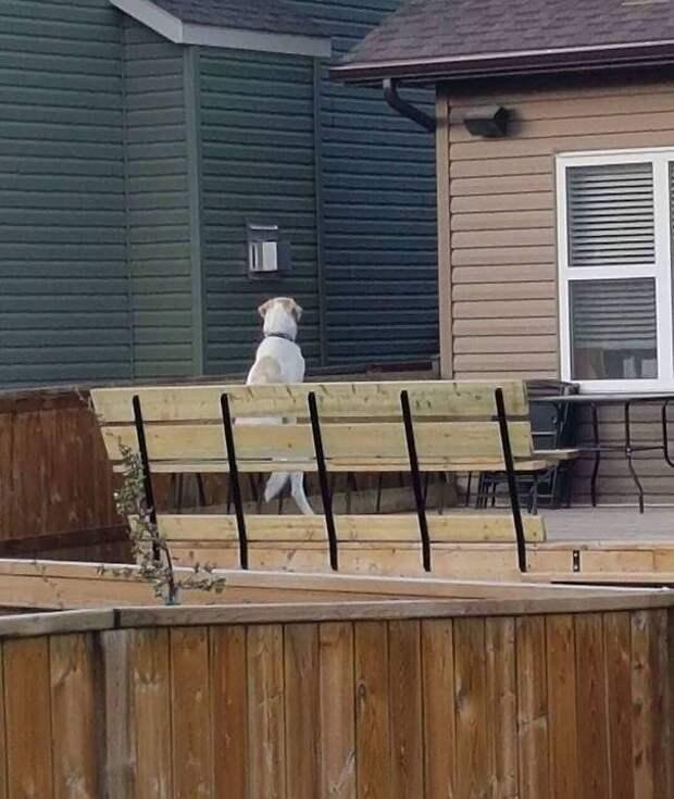 16 соседей, с которыми не заскучаешь