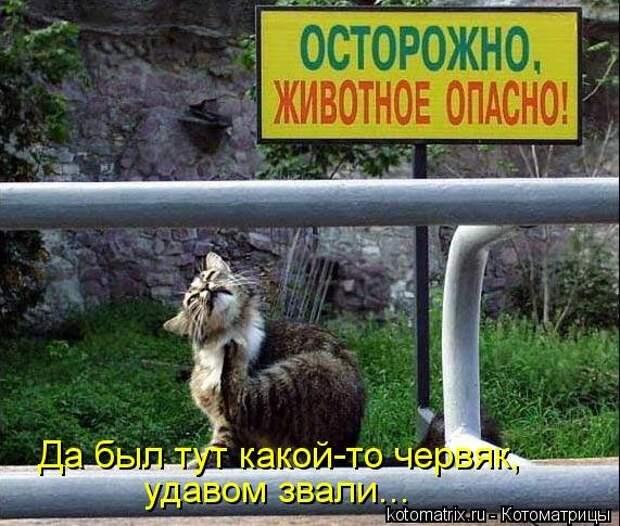1451737597_kotomatricy-31