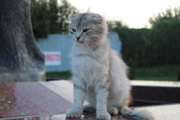 Благородная вислоухая кошечка невероятной красоты сидела на улице и растерянно оглядывалась по сторонам