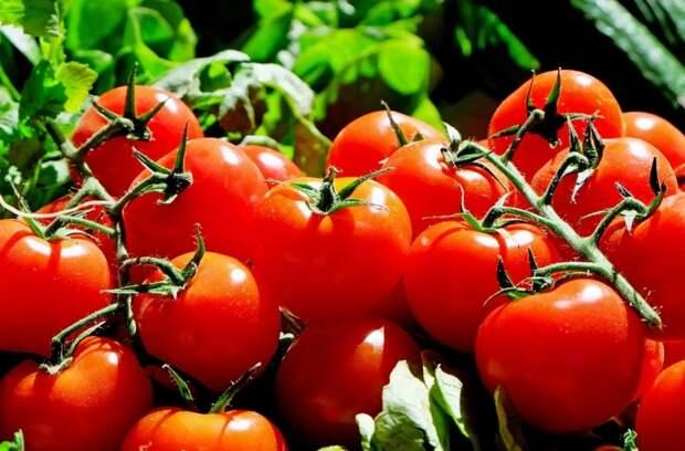Получите реальный суперурожай помидоров, если посадите одно растение рядом