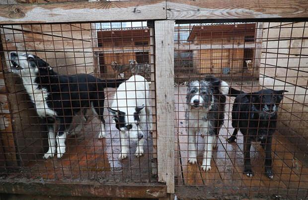 Путин поручил разработать законопроект об учете домашних животных
