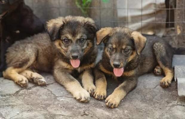 7 крошечных щенков нашли на пороге уличного туалета в лесу