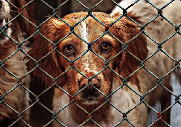 Экоцентр на Ленинградке организует поездку в приют для бездомных животных