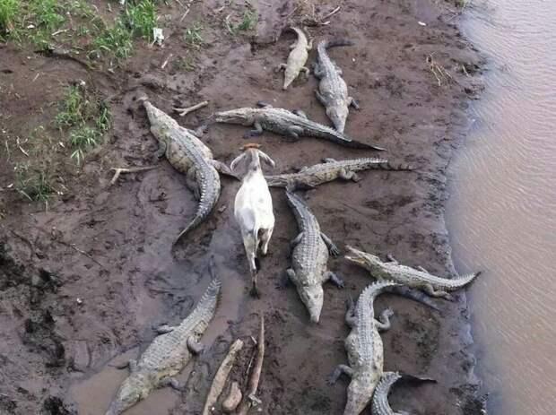Животные, которым все равно