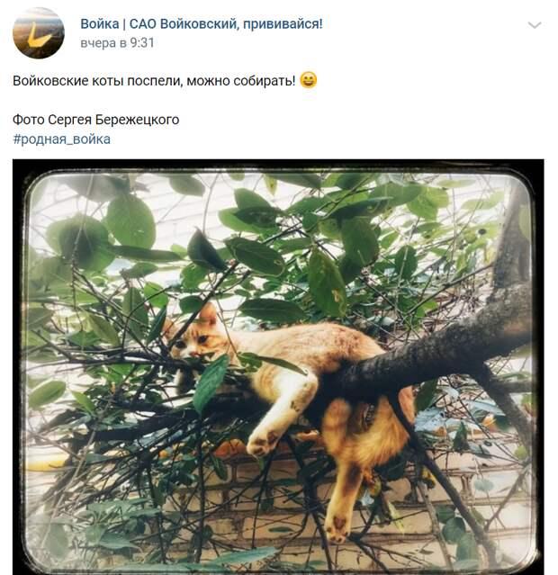 Фото дня: пушистый житель района отдыхает на ветке дерева