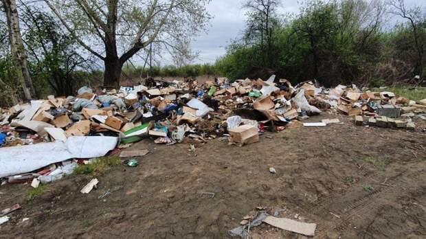 В Берёзовке нашли могильник для собак