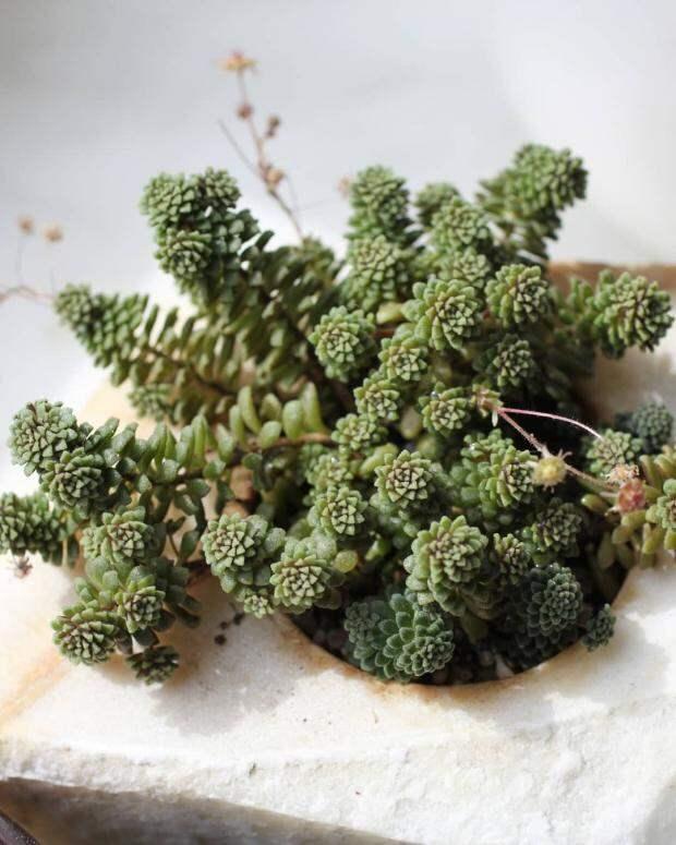 Комнатные растения для ленивых: самые неприхотливые цветы не требующие особенного ухода