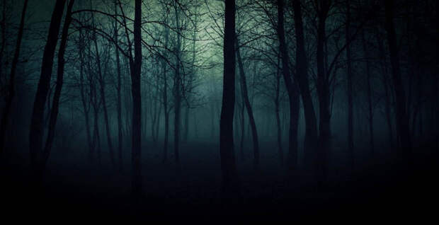 7 самых страшных лесов планеты