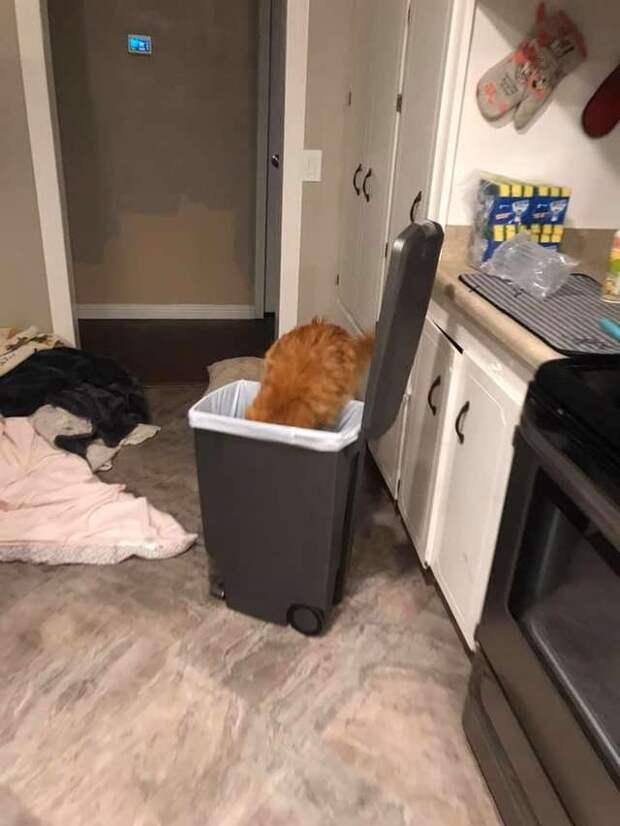 кошка роется в мусоре