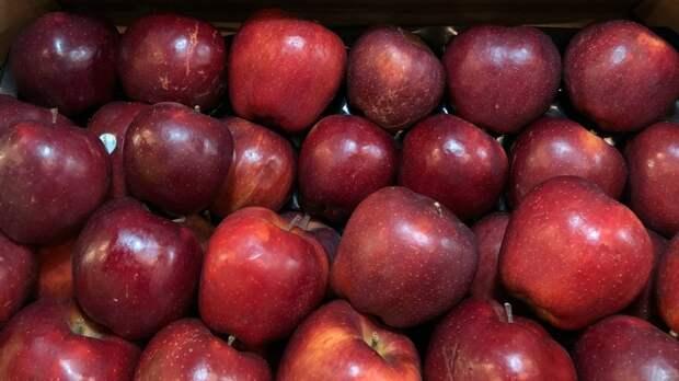 В Подмосковье не допустили партию яблок из Сербии