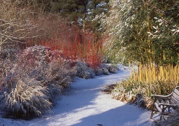 Картинки по запросу сад зимой