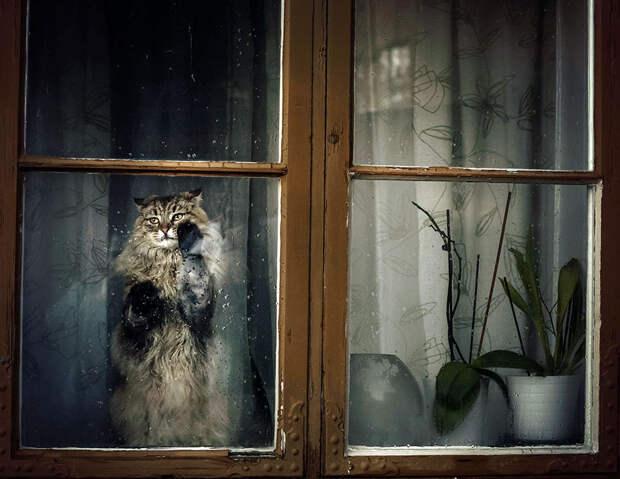 throughwindow06 Нечеловеческое любопытство: что видят в окнах животные