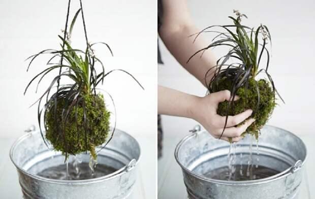 какие бывают домашние растения