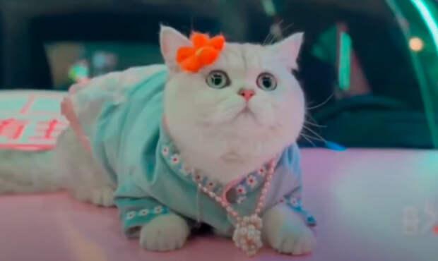 Белый кот стал звездой на автосалонах в Китае
