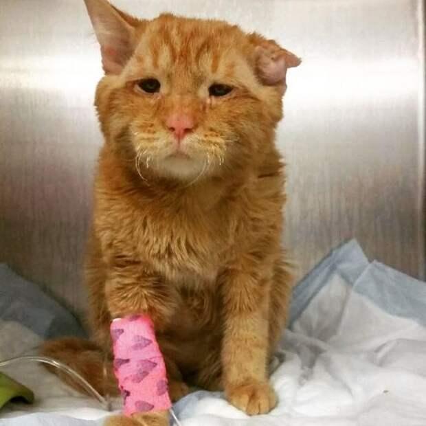 Бенбен — самый грустный кот в интернете, который обрёл дом и сразу же преобразился