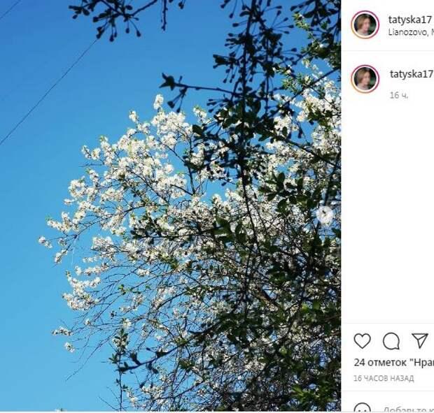 Фотокадр: у жительницы Лианозова за окном – всё в цвету