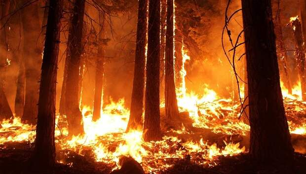 Спасатели будут предотвращать природные пожары в Подмосковье с помощью приложения