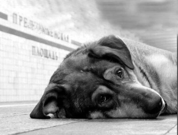 Отчего так предан пёс