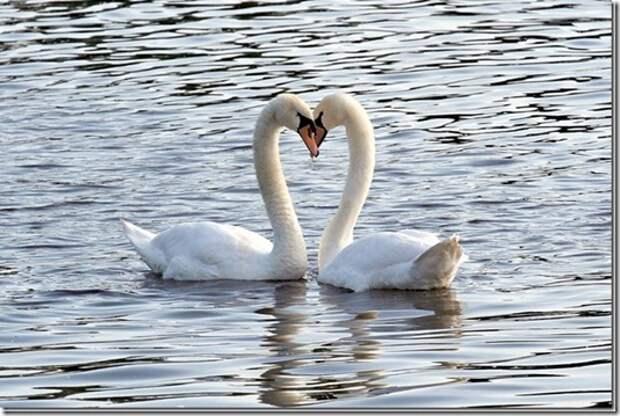 Животная любовь