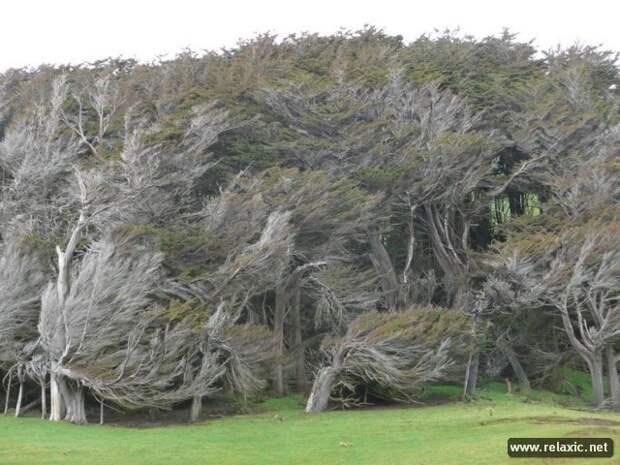 Гонимые ветром (12 фото)