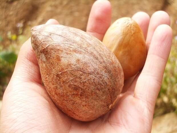 косточка авокадо как кушать