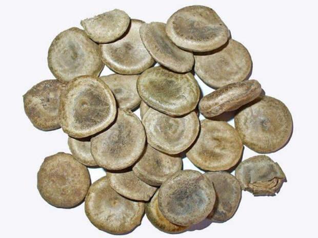 Семена чилибуха.