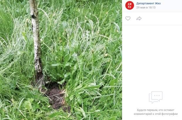Сорняк из парка «Дубрава» удалили – Департамент ЖКХ