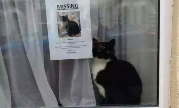 У семьи пропал кот, люди за несколько дней его нашли, а через неделю пришел еще один такой же кот