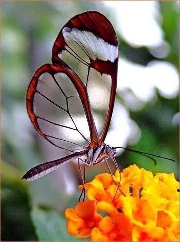 Яркие краски лета