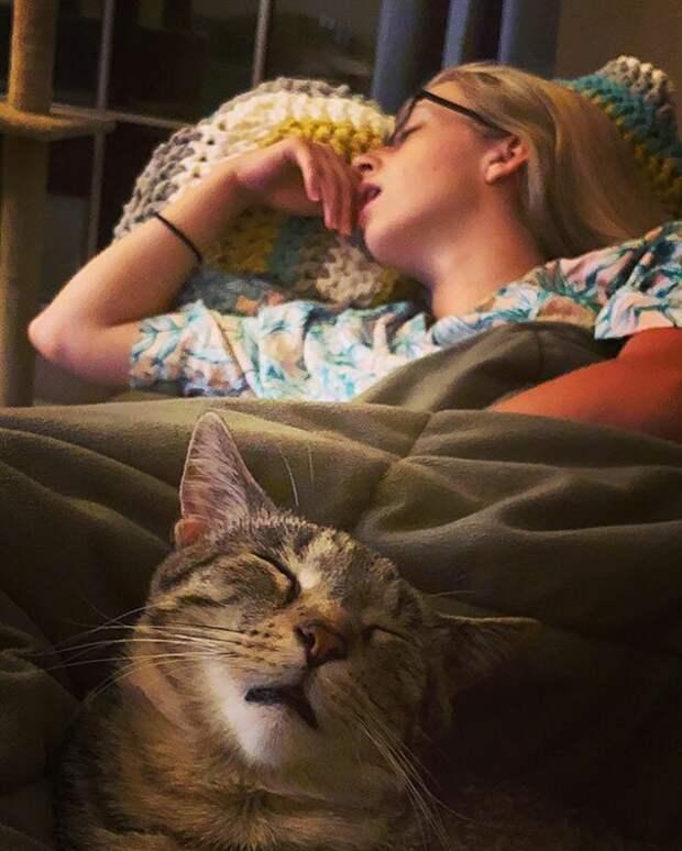 20. Сладкий сон с хозяевами животные, забавно, забавные животные, кот, коты, кошки, приколы с животными, смешно