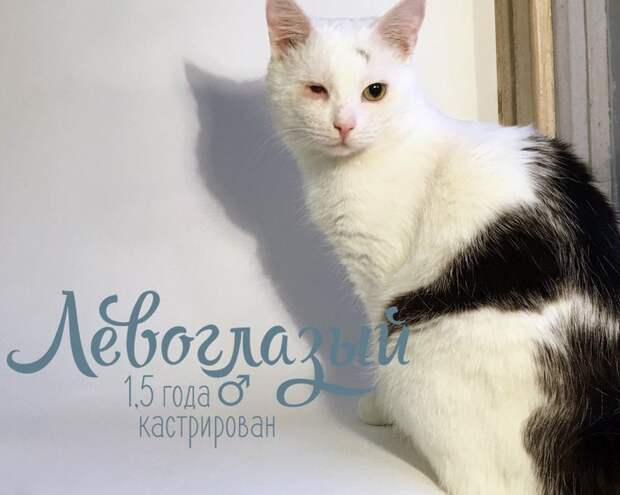 «Коты, проблемные, 21 штука. Берём!» Эта удивительная питерская история бьёт в самое сердце