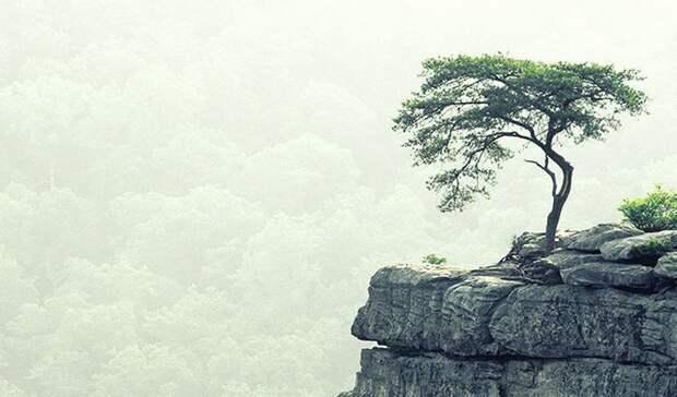 Притча о дереве притчи, сказки