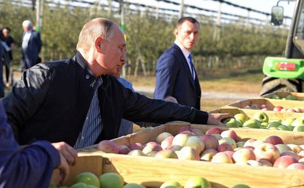 Владимир Путин порадовался российским яблокам