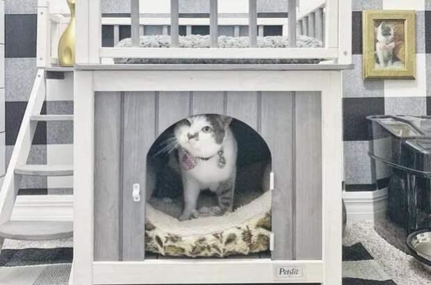 Хозяева построили кошке потрясающий дом в доме