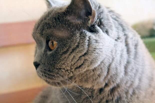 Кот нуждается в помощи/ gazeta-marfino.ru