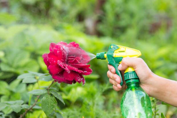 Горчица дома и на даче: 25 способов применения