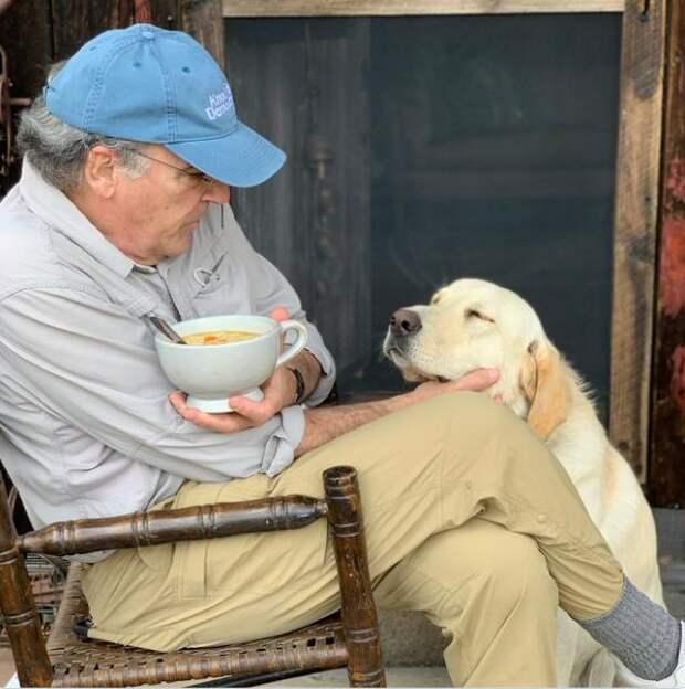 Взгляд, с которым собачки выпрашивают еду: невозможно устоять!