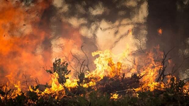 Площадь лесных пожаров в Иркутской области превысила 34 тысячи гектаров